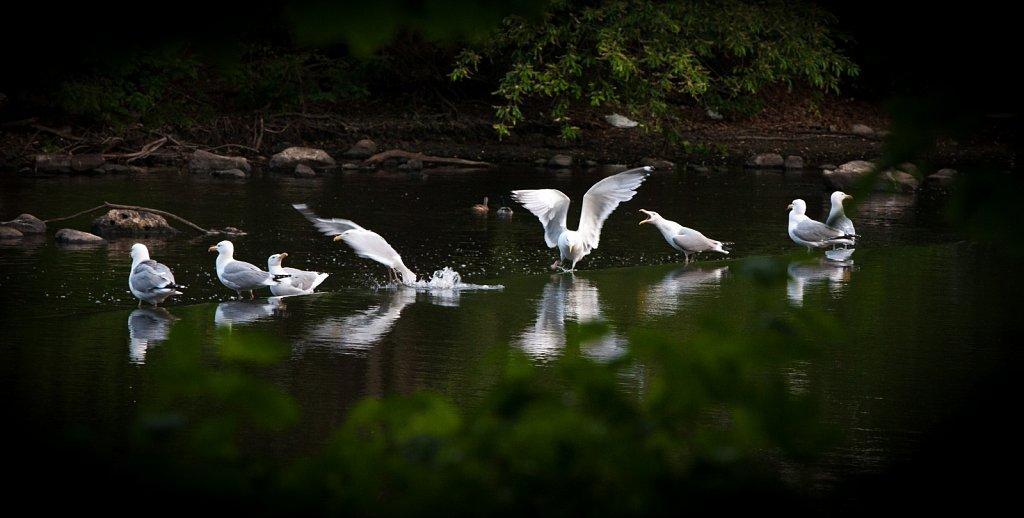 Heron-falls-2015-6-3093.jpg